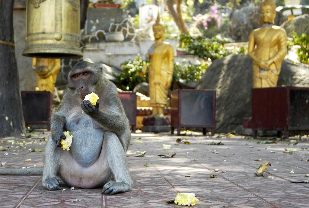 Eat Like a Buddha
