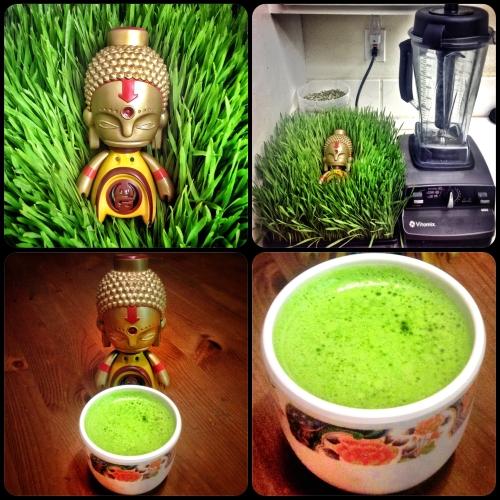 Wheatgrass Juice Vitamix Buddha